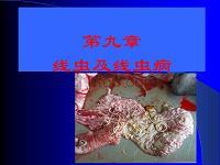 xianxing+-+线虫病