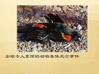 全球令人震惊的动物集体死亡事件