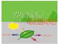 光合作用与细胞呼吸