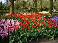 让生命灿烂如花——真爱生命主题班会