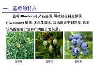 蓝莓生产与加工利用