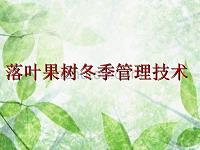落叶果树冬季管理技术