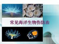 常见的有毒海洋生物伤防治