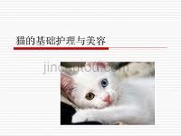 猫的基础护理与美容