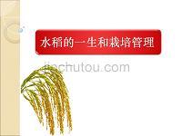 水稻的一生和栽培管理