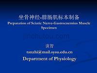 坐骨神经腓肠肌标本制备