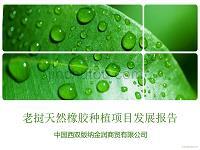 天然橡胶种植可行性分析