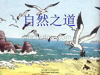 人教版四年级语文下册《自然之道》(公开课)PPT课件
