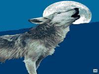 蒲松龄《狼》课件