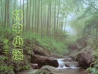 苏教版九上《林中小溪》
