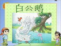 白公鹅教学设计教学课件