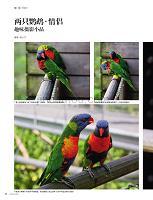 两只鹦鹉情侣趣味摄影小品